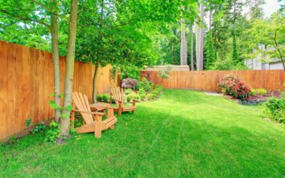How Lawn Care Issues Can Affect Trees
