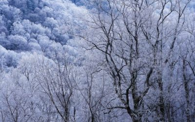 3 Reasons to Trim Your Trees in the Winter