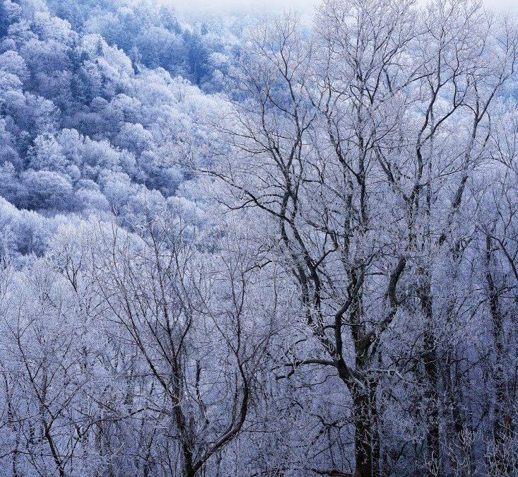 winter tree pruning denver