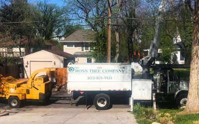 Tree Pruning and Removal in Tight Places