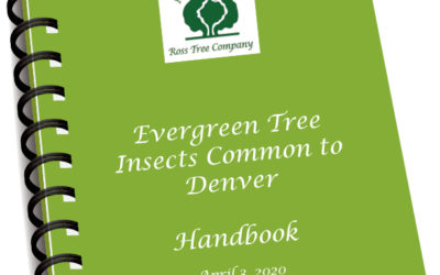 Evergreen Tree Insects Common to Denver Handbook