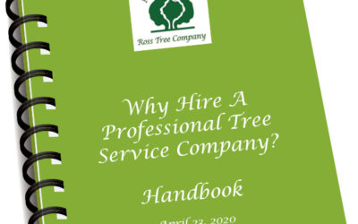 Why Hire a Professional Tree Service Company?