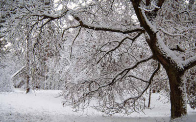 What To Do About Tree Freeze Damage?