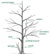 evaluate tree structure