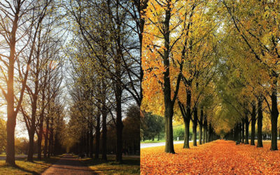 Ask A Professional – Why Do Hardwood Trees Drop Their Leafs?