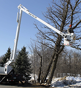tree pruning in the winter