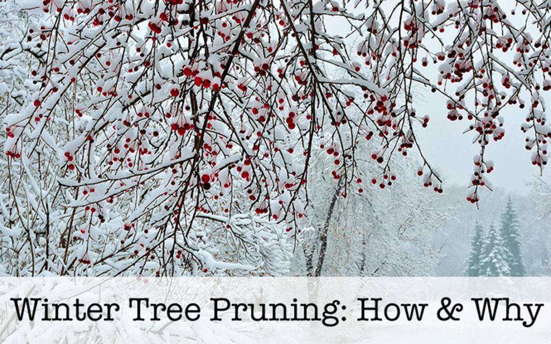 Ask a Professional – Is It Ok to Prune Trees in the Winter?