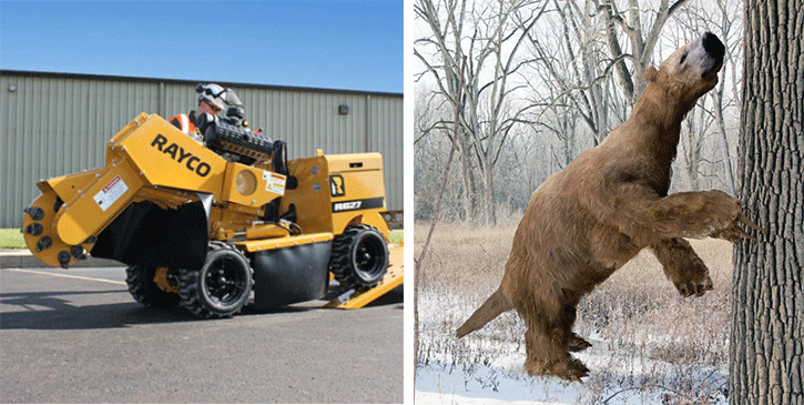rayco stump cutter and giant sloth