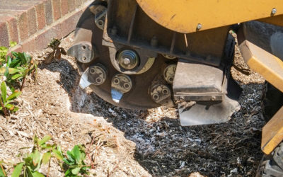 Ask a Professional – What Are The Benefits Of Removing A Tree Stump From Your Yard?