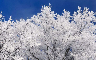 Ask a Professional – What Are Late Winter Tree Care Tips for the Denver Area?