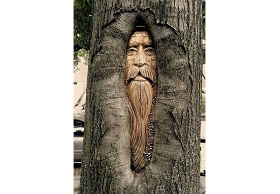 tree wise