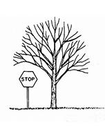 raise pruning