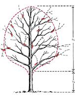 reduce pruning