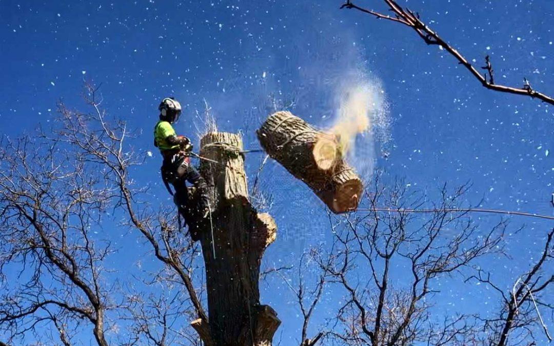 slip lining large cottonwood trunk section