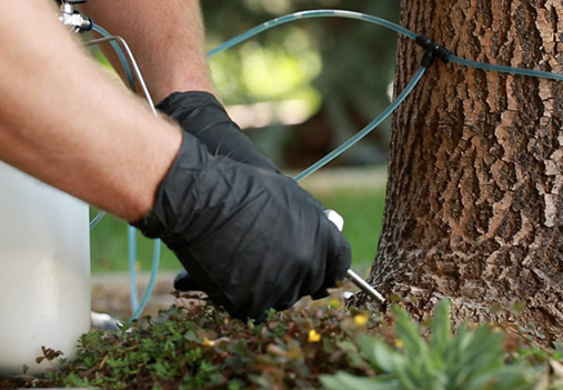 trunk injection tree insect control