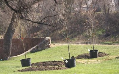 What to do after planting a new tree?