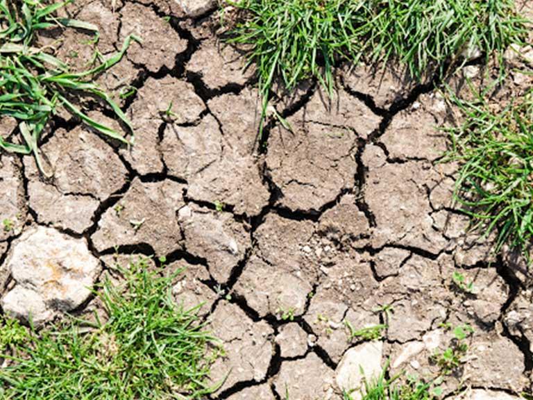 clay soils in Denver