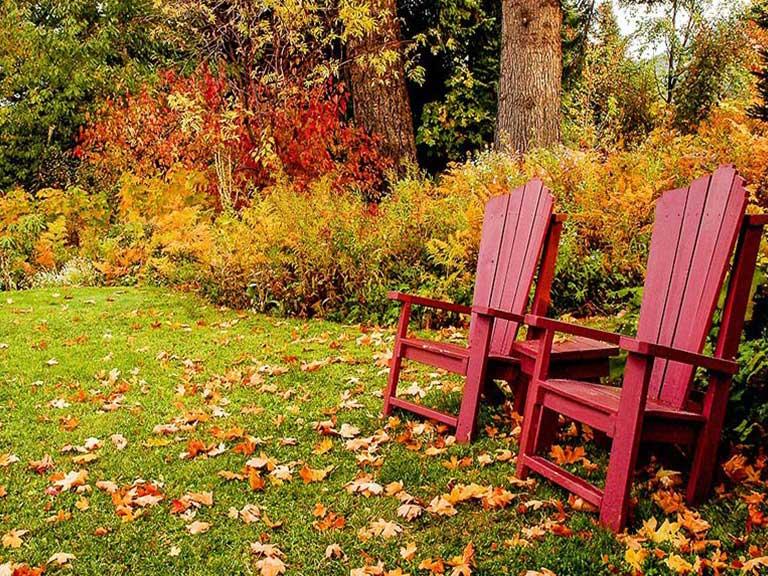 Fall lawn care in Denver