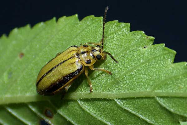 tree insect control in the spring