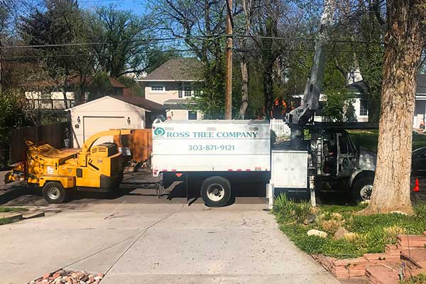 tree pruning in the spring