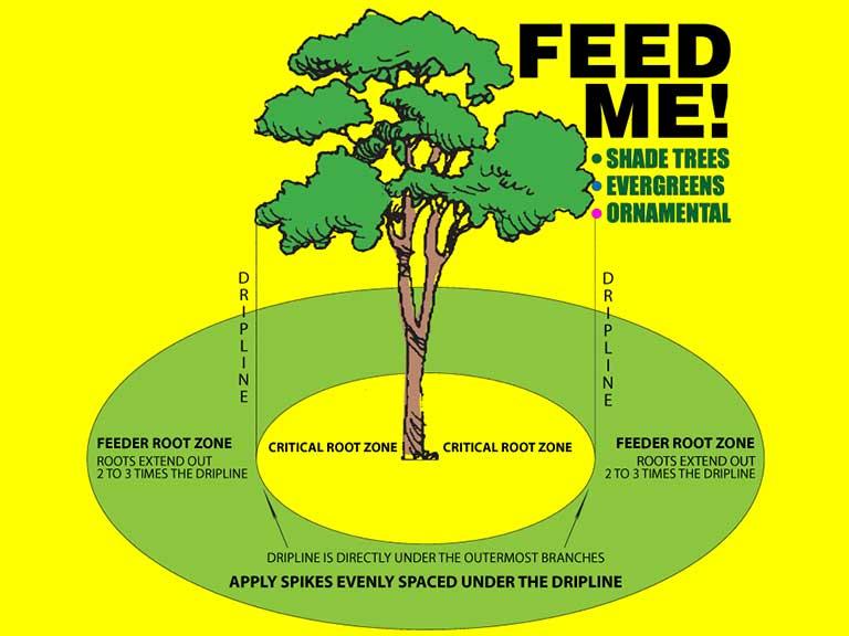 winter deep root feeding